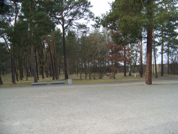 sachsenhausen concentration camp trees
